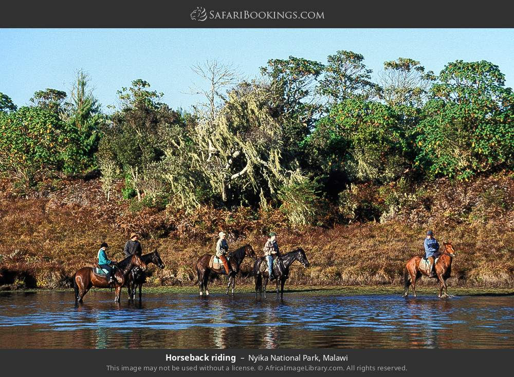 Horse riding in Nyika National Park, Malawi