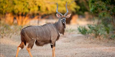 4-Day Masai Mara & Lake Nakuru Budget Joining Safari