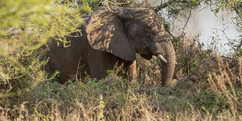 9-Day Kenya Wildlife Cover Best Lodge/Camp Safari