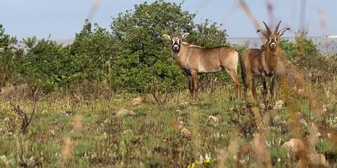 4-Day Maasai Mara Special Safari