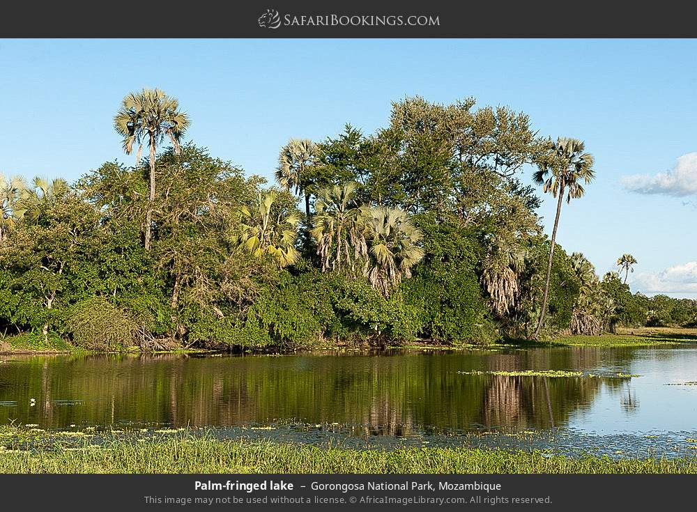 Palm-fringed lake in Gorongosa National Park, Mozambique