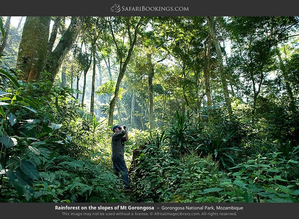 Rainforest on the slopes of Mount Gorongosa in Gorongosa National Park, Mozambique