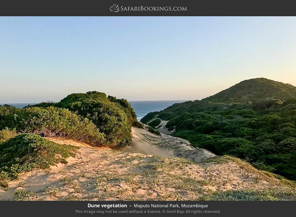 Dune vegetation in Maputo Special Reserve, Mozambique