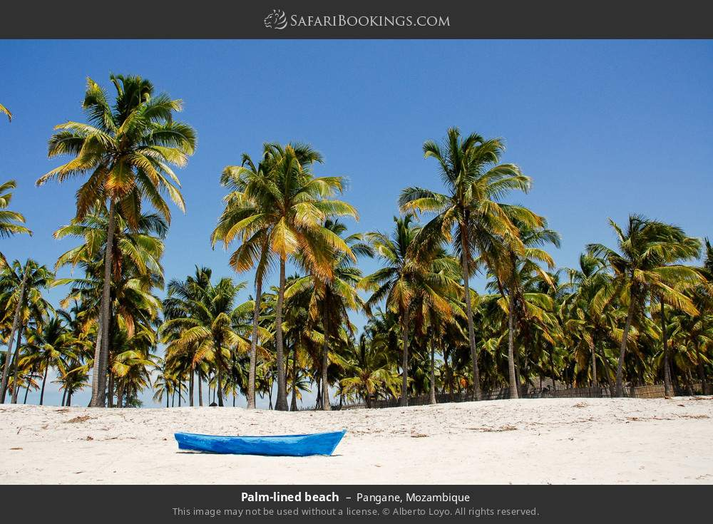 Palm-lined beach in Pangane, Mozambique