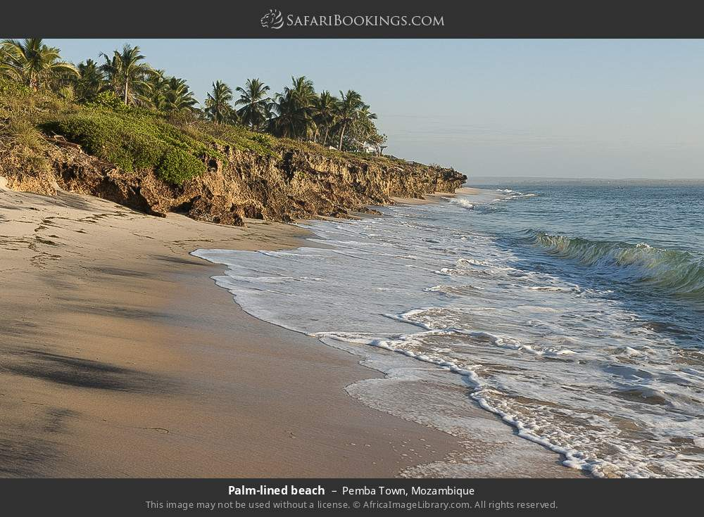 Palm-lined beach in Pemba Town, Mozambique