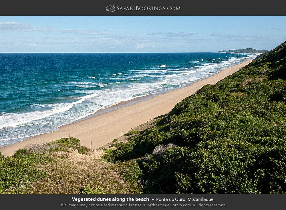 Vegetated dunes along the beach in Ponta do Ouro, Mozambique