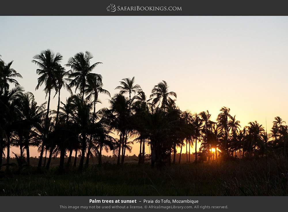 Palm trees at sunset in Praia do Tofo, Mozambique