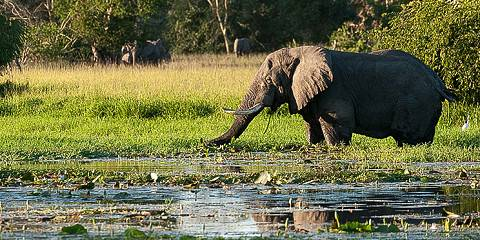 3-Day Adventure Safari to Murchison Falls NP
