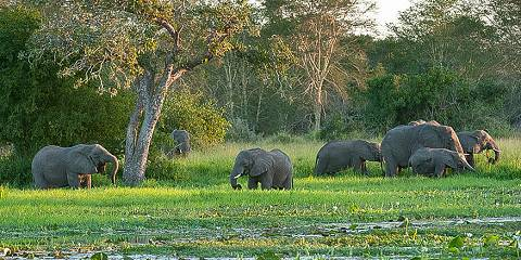 8-Day Kruger National Park, Swaziland and Zululand