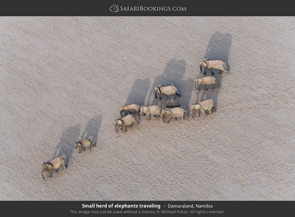 Small herd of elephants travelling in Damaraland, Namibia