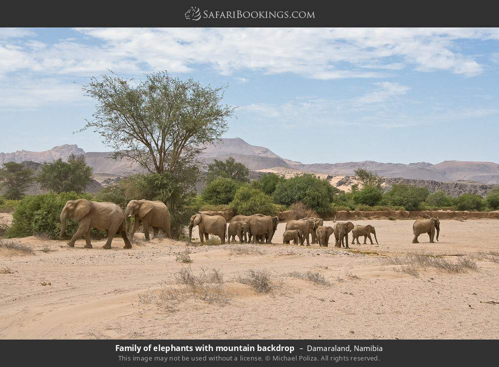 Family of elephants with mountain backdrop in Damaraland, Namibia