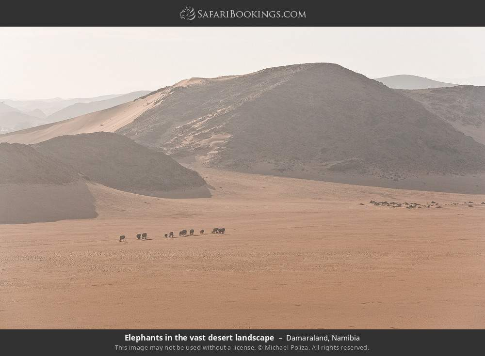 Elephants in the vast desert landscape in Damaraland, Namibia