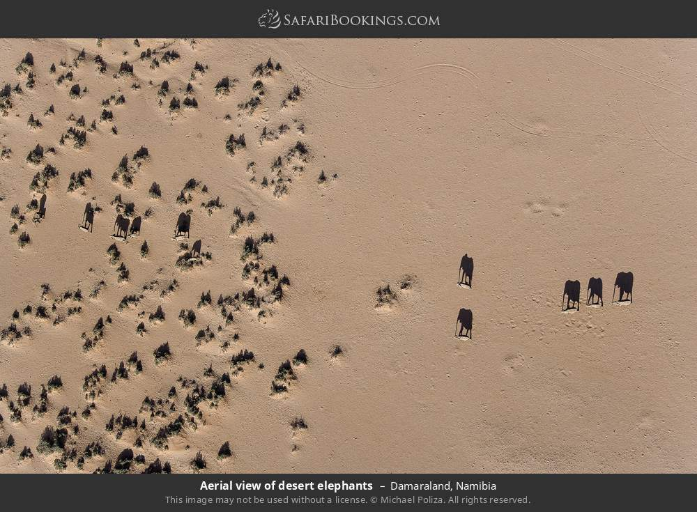 Skyview of desert elephants in Damaraland, Namibia