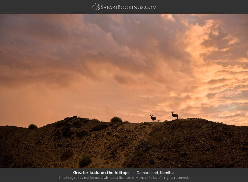 Greater kudu on the hilltops  in Damaraland, Namibia