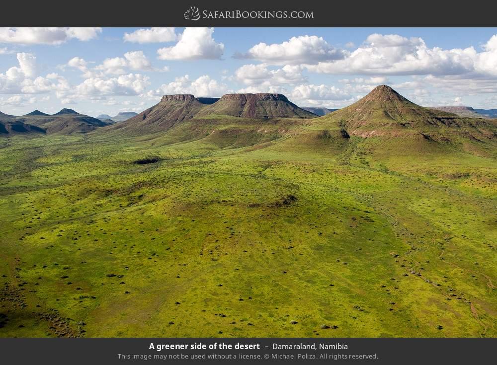 A greener side of the desert in Damaraland, Namibia