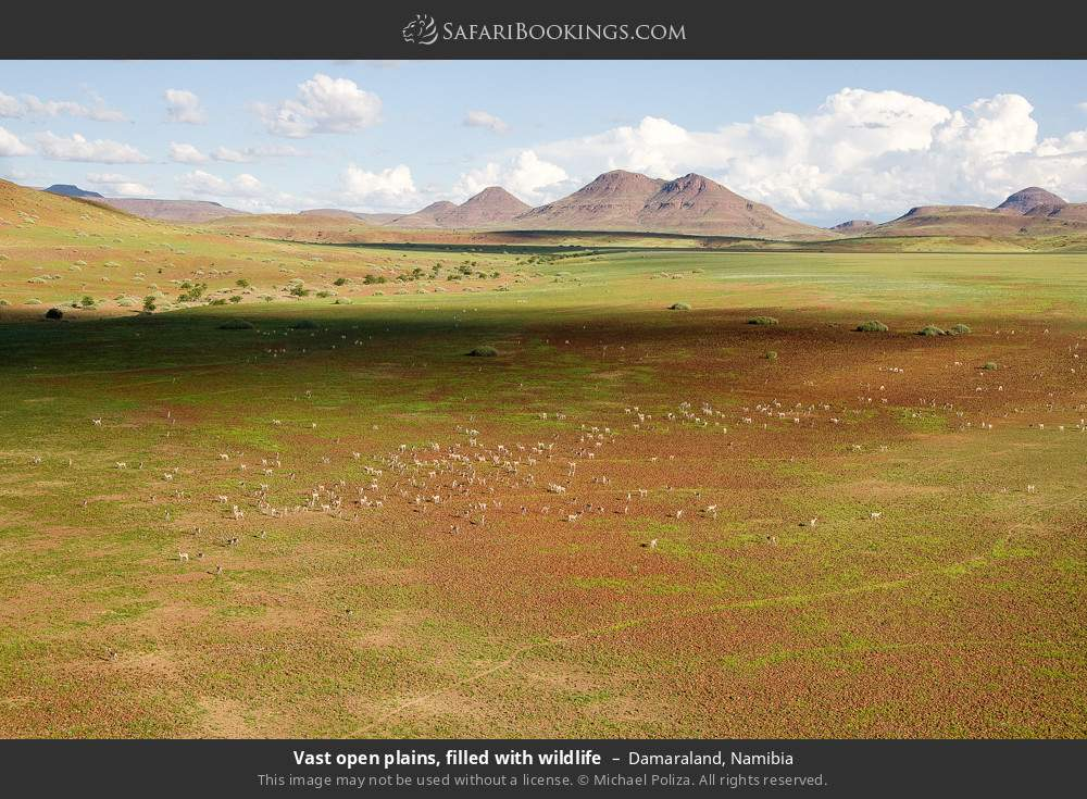 Vast open plains, filled with wildlife in Damaraland, Namibia