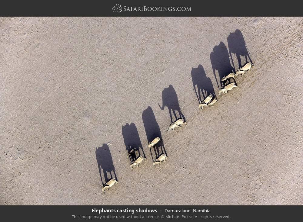 Elephants casting shadows in Damaraland, Namibia