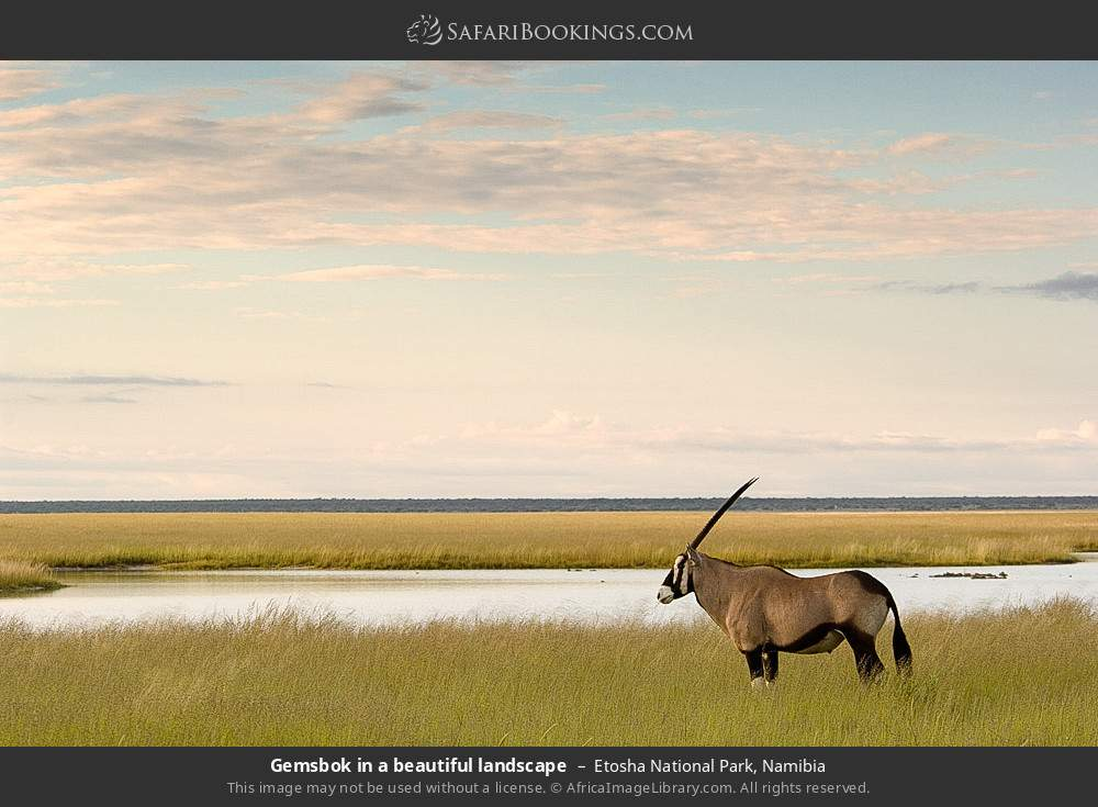 Gemsbok in a beautiful landscape in Etosha National Park, Namibia