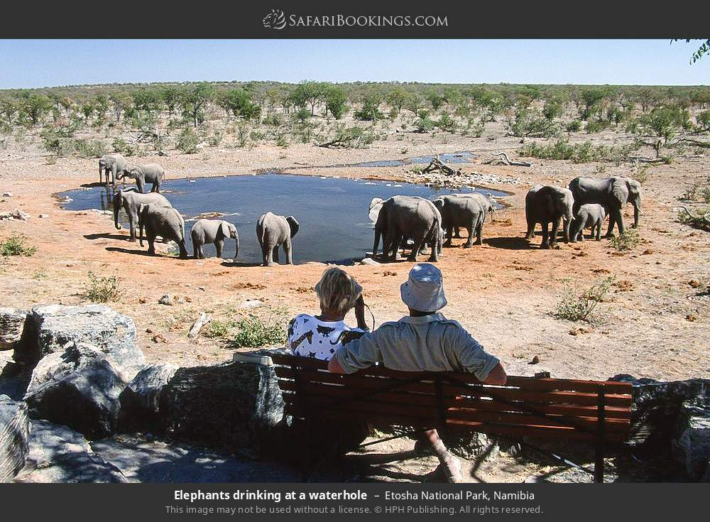 Elephants drinking at a waterhole in Etosha National Park, Namibia