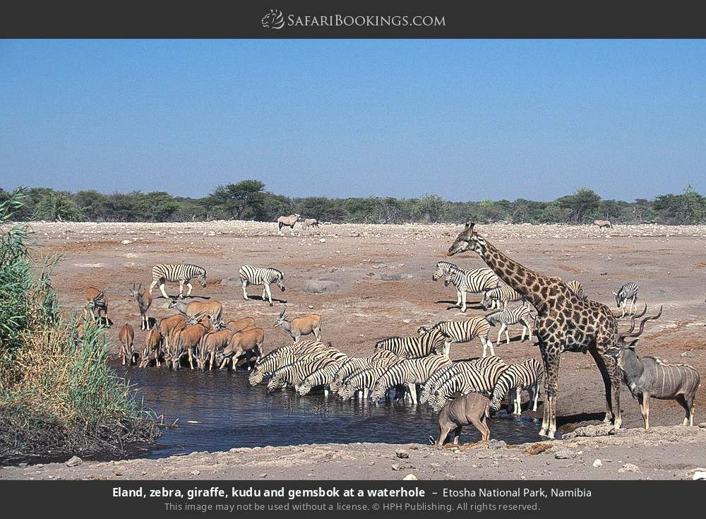Eland, zebra, giraffe, kudu and gemsbok at a waterhole in Etosha National Park, Namibia