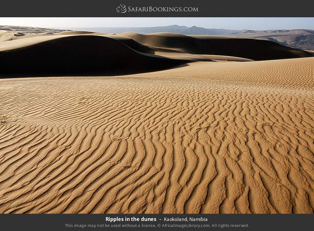 Ripples in the dunes in Kaokoland, Namibia