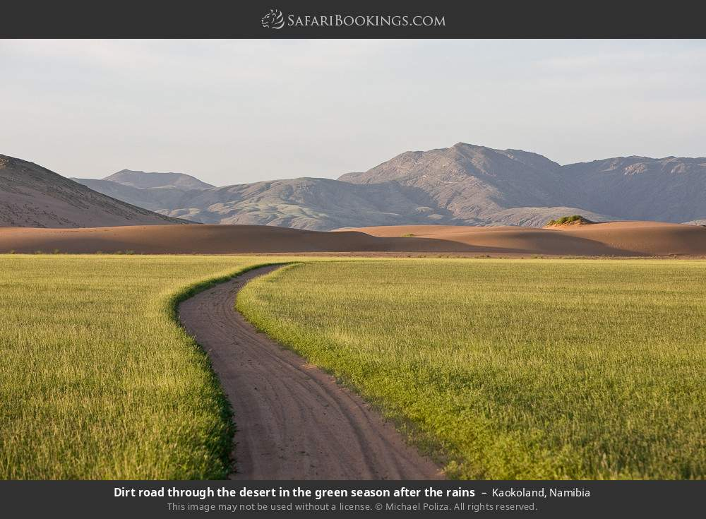 Dirt road through the desert in the green season after the rains in Kaokoland, Namibia