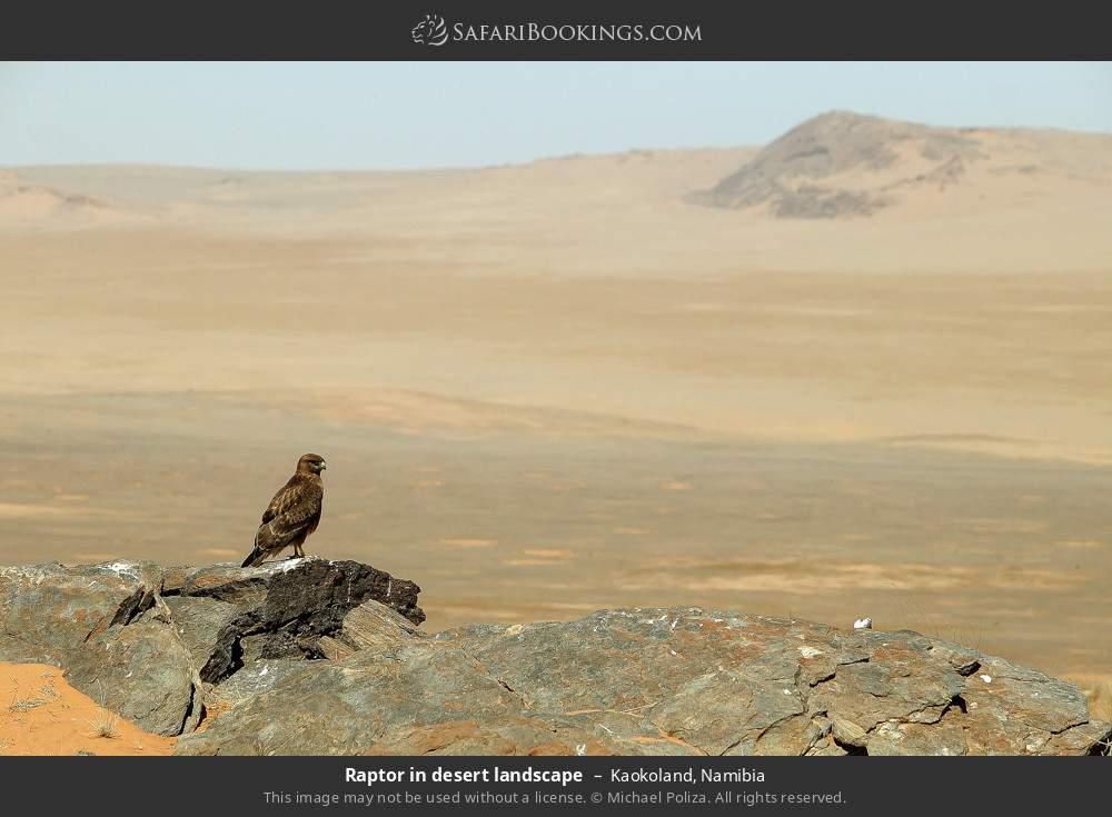 Raptor in desert landscape in Kaokoland, Namibia