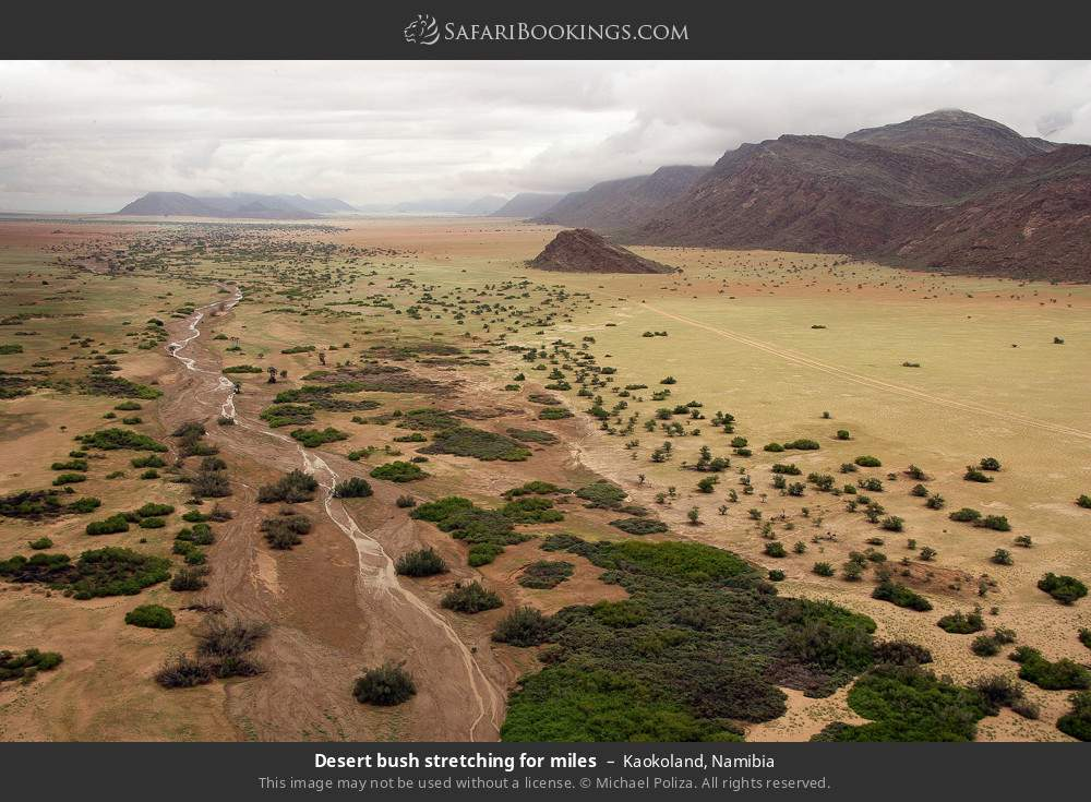 Desert bush stretching for miles in Kaokoland, Namibia