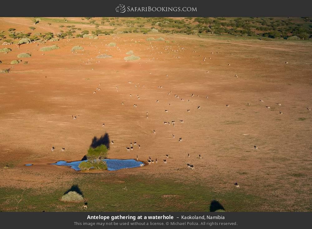 Antelope gathering at a waterhole in Kaokoland, Namibia