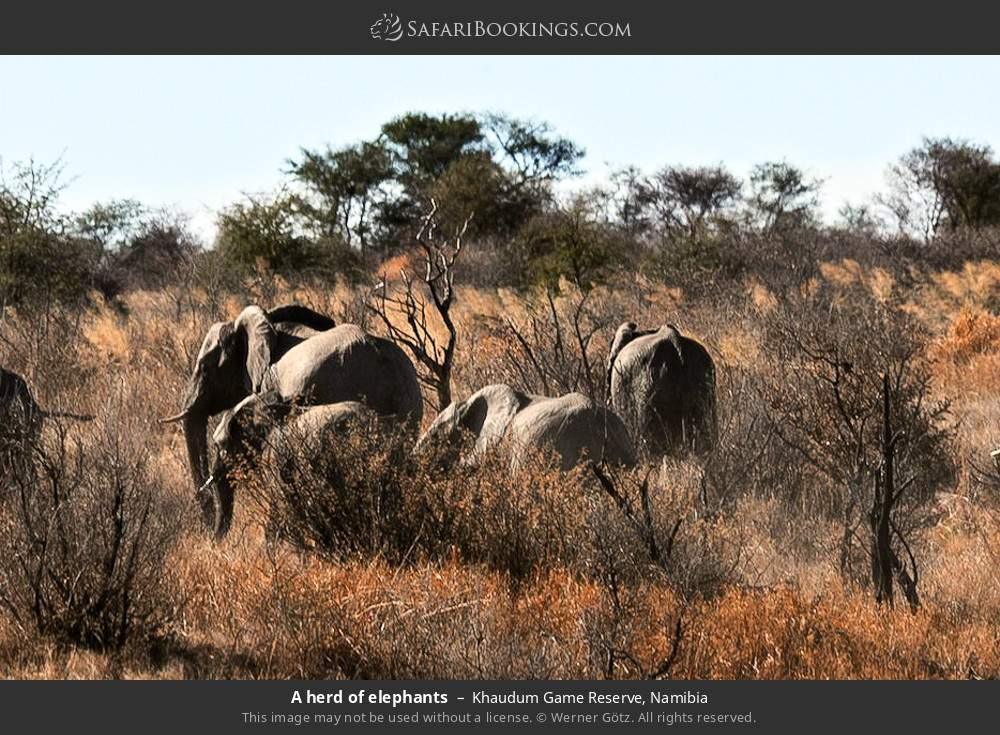 A herd of elephants in Khaudum Game Reserve, Namibia