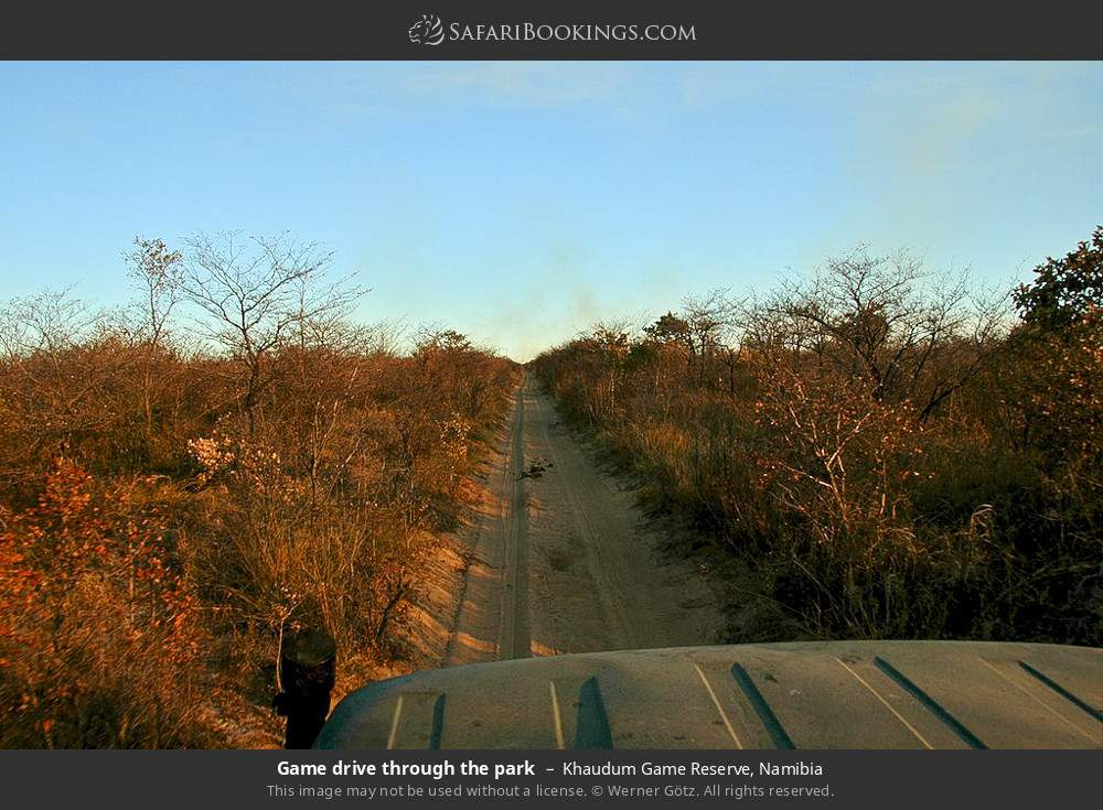 Game drive through the park in Khaudum Game Reserve, Namibia