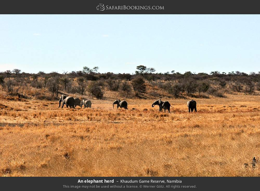 An elephant herd in Khaudum Game Reserve, Namibia