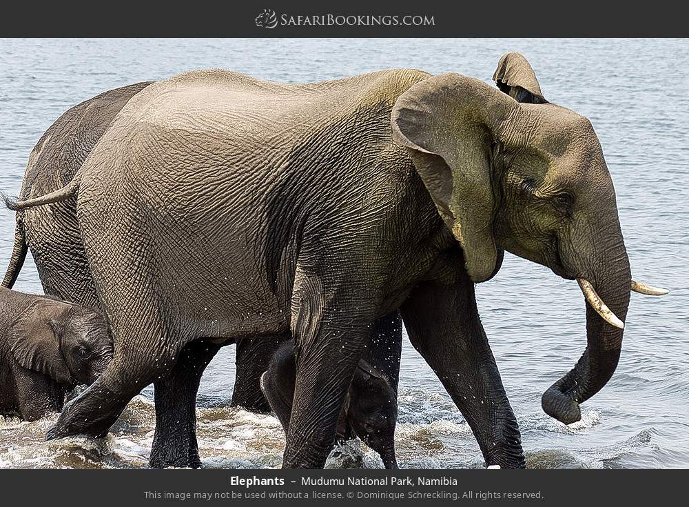 Elephants in Mudumu National Park, Namibia