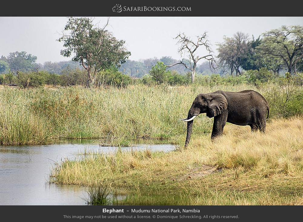 Elephant in Mudumu National Park, Namibia