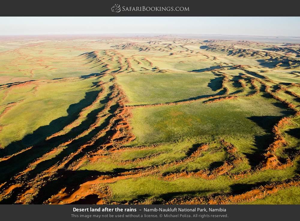 Desert land after the rains in Namib-Naukluft National Park, Namibia