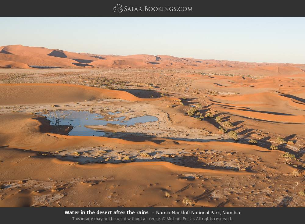 Water in the desert after the rains in Namib-Naukluft National Park, Namibia