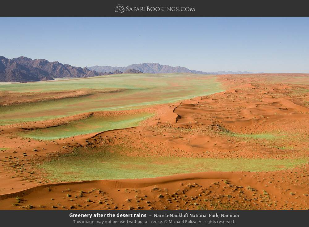 Greenery after the desert rains in Namib-Naukluft National Park, Namibia