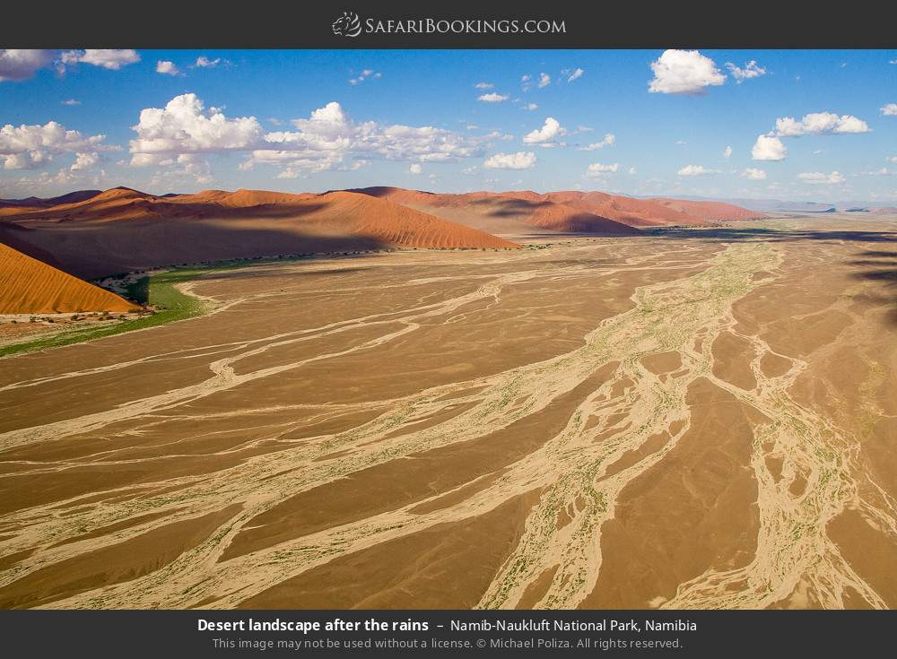Desert landscape after the rains in Namib-Naukluft National Park, Namibia