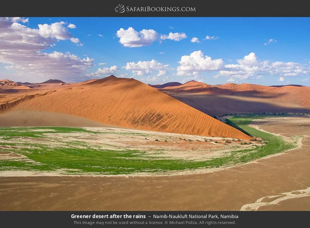 Greener desert after the rains in Namib-Naukluft National Park, Namibia