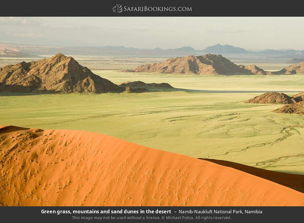 Green grass, mountains and sand dunes in the desert in Namib-Naukluft National Park, Namibia
