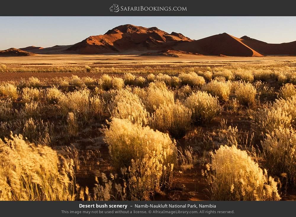 Desert bush scenery in Namib-Naukluft National Park, Namibia