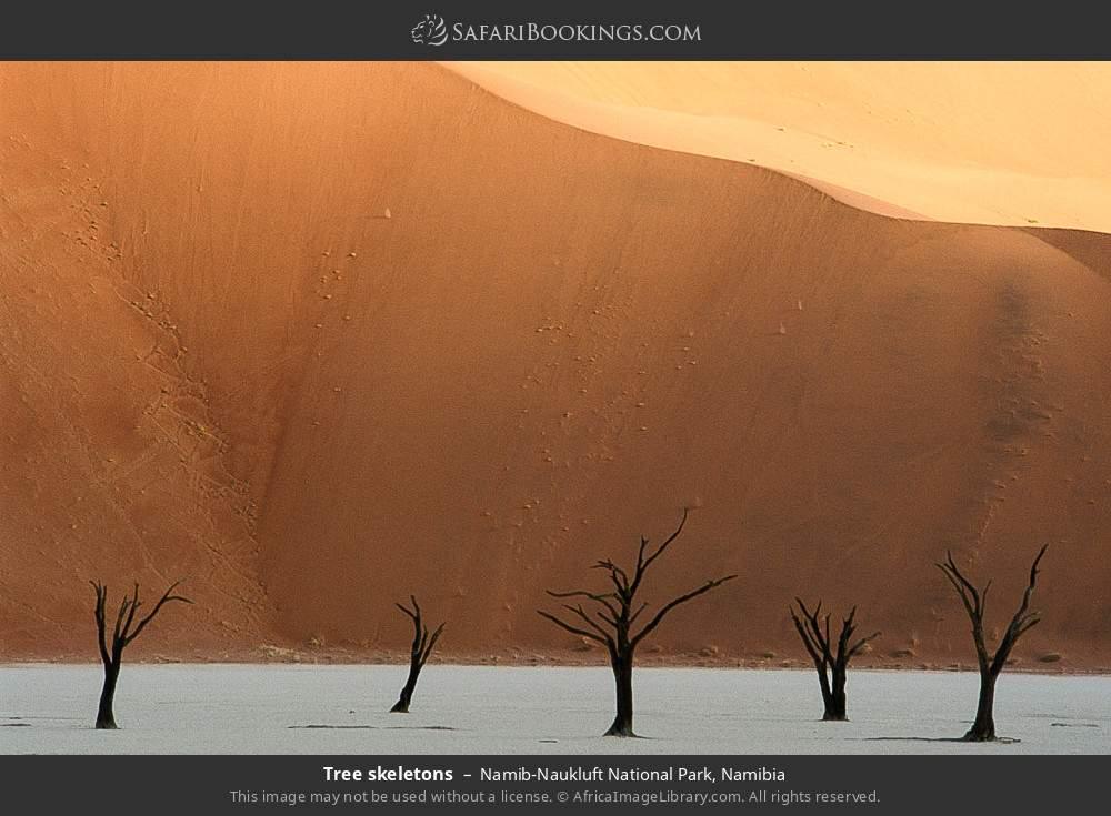 Tree skeletons in Namib-Naukluft National Park, Namibia