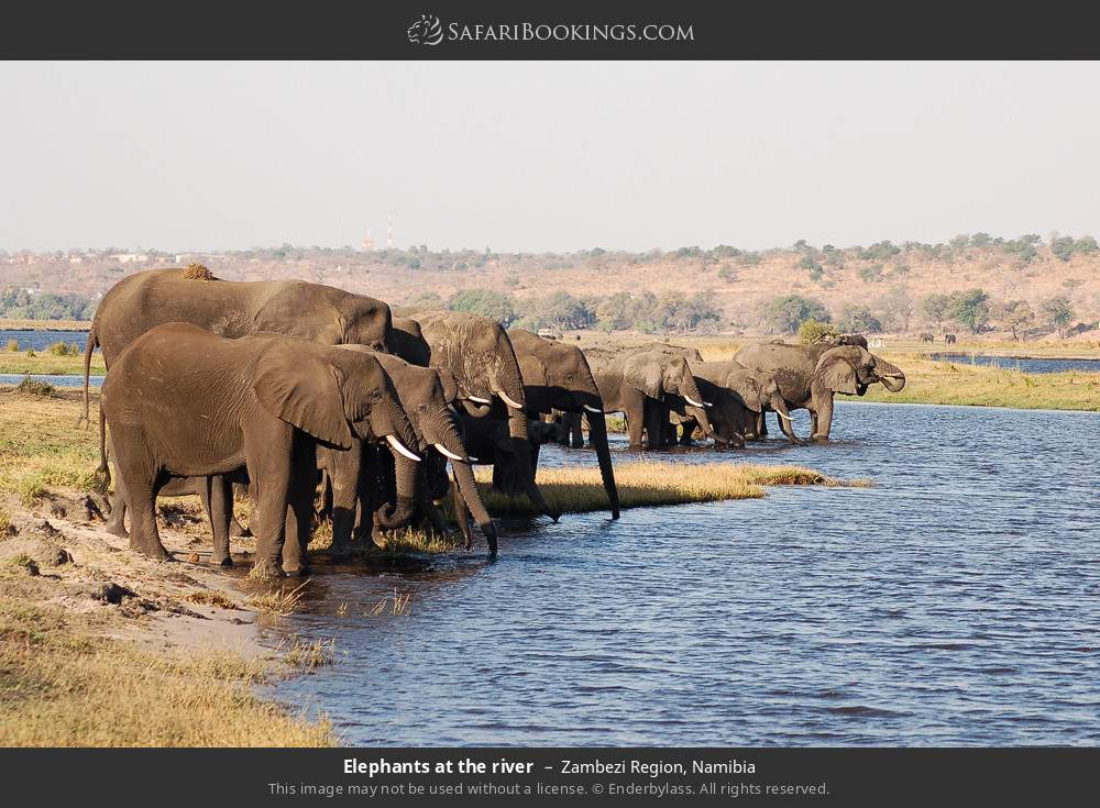 Elephants at the river in Zambezi Region, Namibia