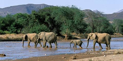 4-Day Group Tour to Tarangire, Serengeti and Ngorongoro