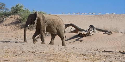 15-Day Namibia Self-Drive Luxury Safari