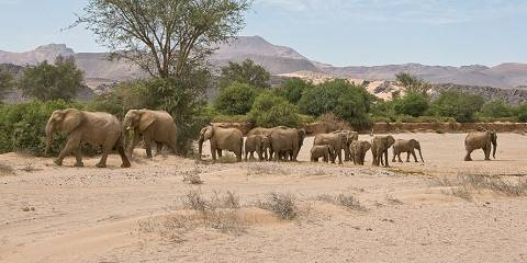 18-Day Wildlife, Landscapes and Cultural Experience