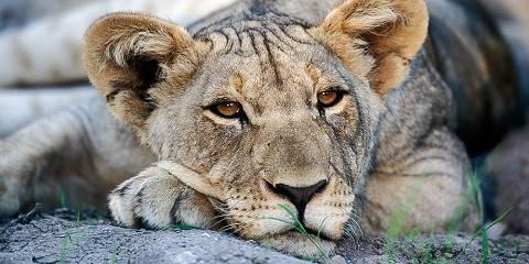 3-Day Safari to Etosha National Park, Namibia