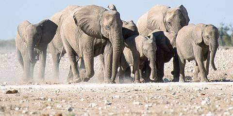 8-Day Classic Namibia Group Safari