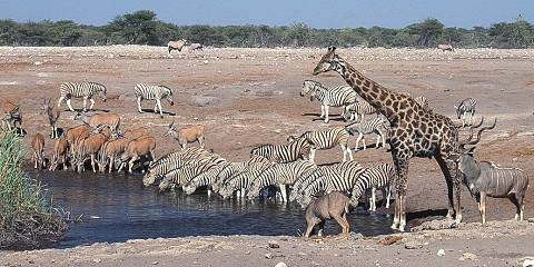 10-Day Special Highlights of Namibia