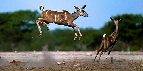 6-Day Namibia Epic Safari